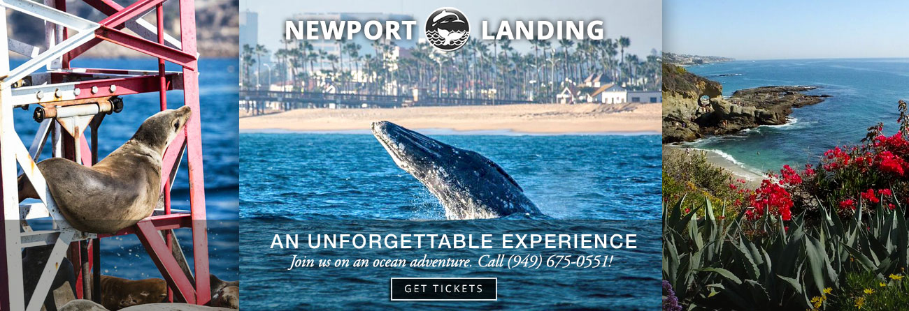 Whale Watching In Orange County California