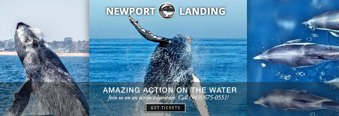 Get on a whalewatching trip from Newport Landing!