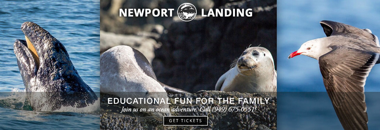 Newport Landing whalewatching in Orange County