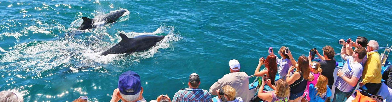 Dana Point Whale Watching - Complete guide to whale watching
