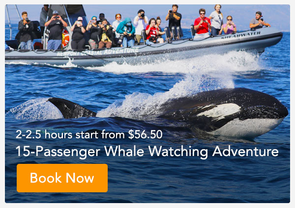Whale Watching Tours Pricing