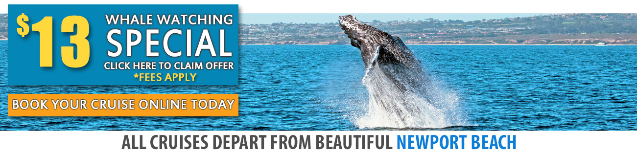 Whale Watching San Diego Visitors Cruise Special - Cruises departing from san diego