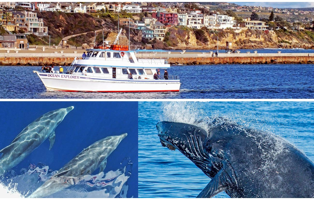 Whale Watching Off Orange County From