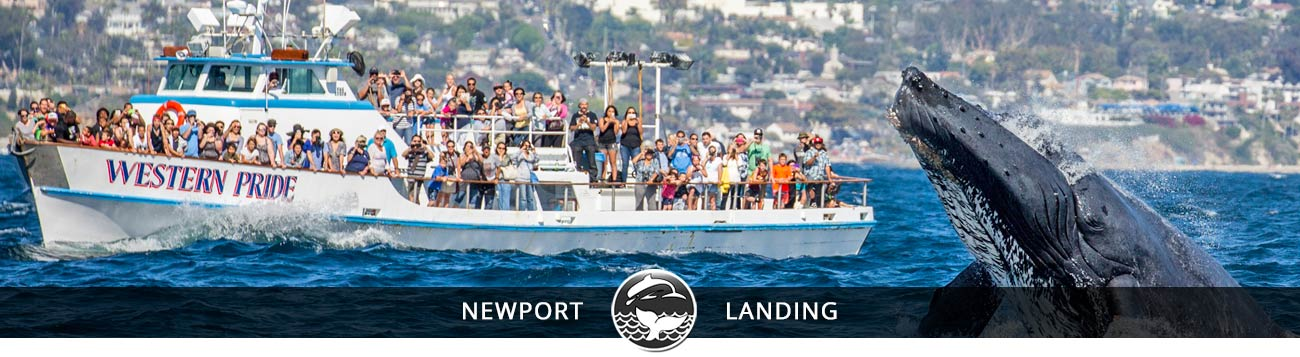 Reserve Now Newport Beach Whale Watching